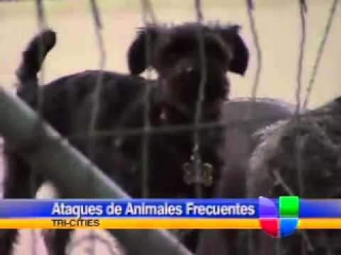 Ataques de animales más frecuentes en Tri-Cities, suben costos por seguro de vivienda