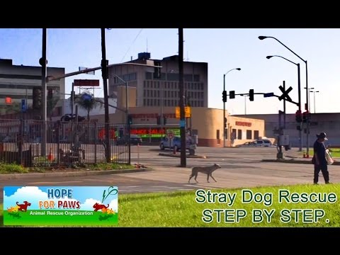 0 Stray dog rescue   step by step.
