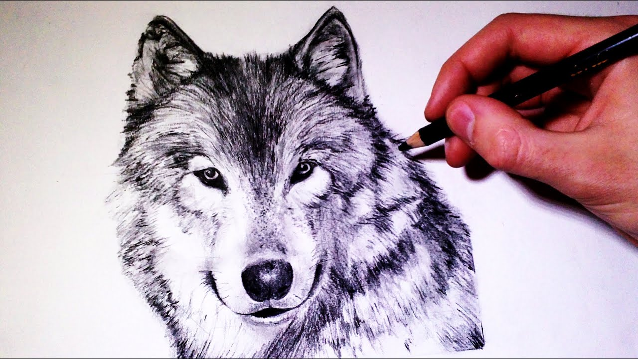 How To Draw A Wolf: How To Draw A Realistic Wolf