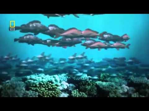 Saving the World's Oceans - Part 1