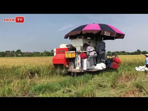 Hạt Gạo Làng Ta - Nhạc Thiếu Nhi Hay Nhất Có Máy Gặt Lúa