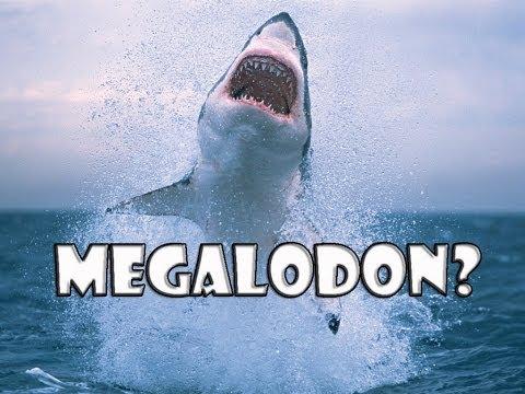 Tubarão de 3 Metros é Devorado
