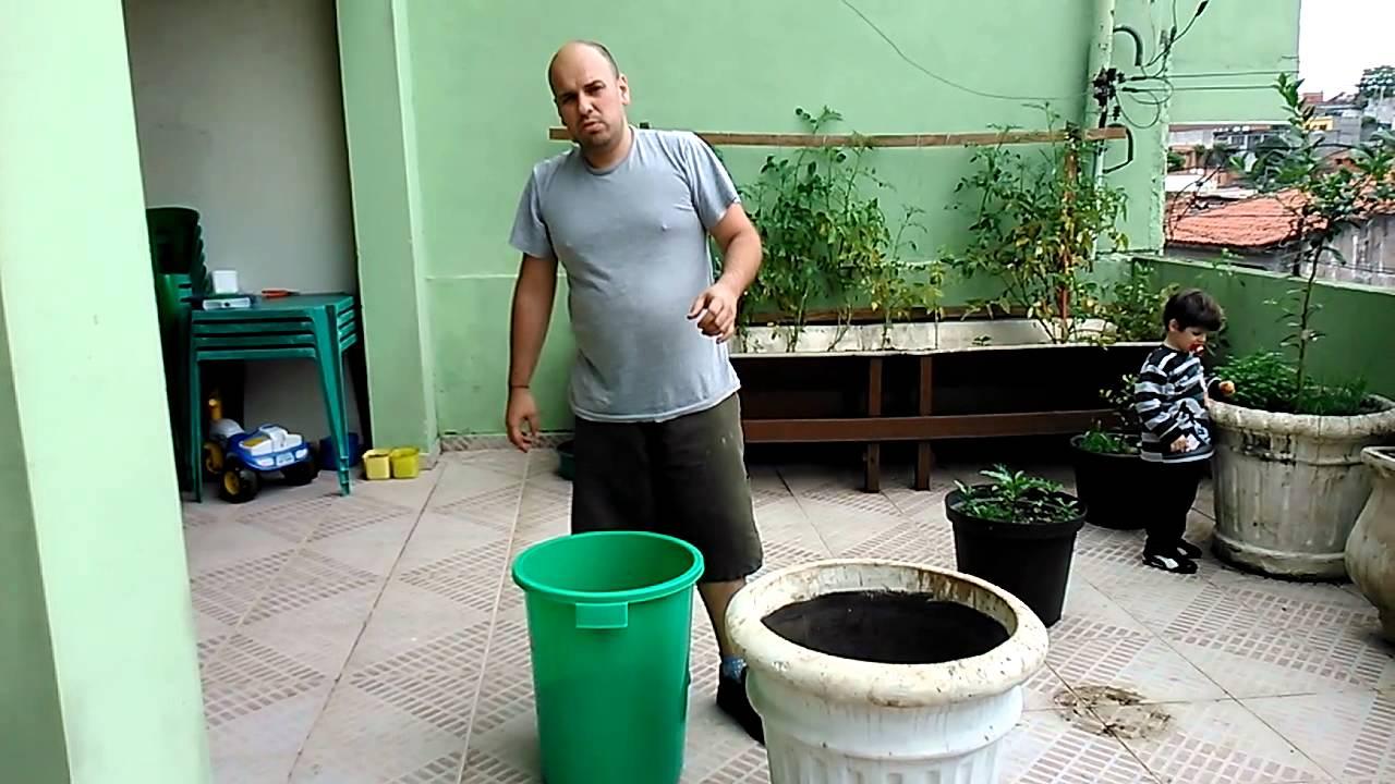 Como plantar árvores frutíferas em vasos - YouTube
