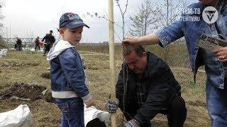 Посадим деревья все  вместе!