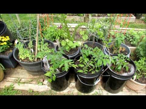 Garden Tour 2: Cool Weather Crops In, Container Plants Growing, Transplants are Outdoors