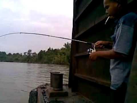 mancing udang galah di atas kapal ponton batubara