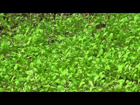 Tecomate vs Evolved Harvest Food Plots part 2- tecomate still winning