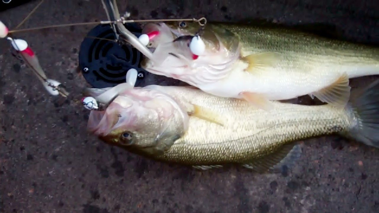 Alabama rig bass fishing youtube for Alabama rig fishing