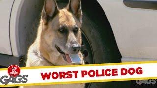 El peor perro policía