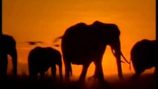 BBC Vida Selvagem