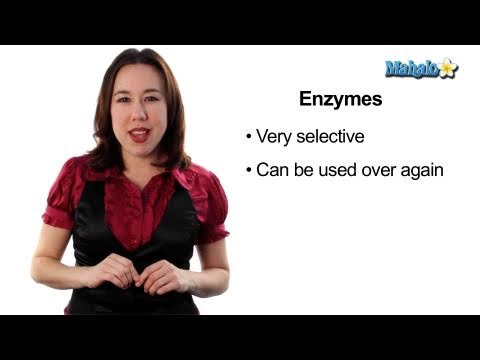 Learn Biology: Cells—Enzymes