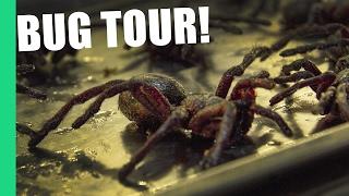 Eating Tarantula in Cambodia on Pub Street (Feat. Bugs Cafe)