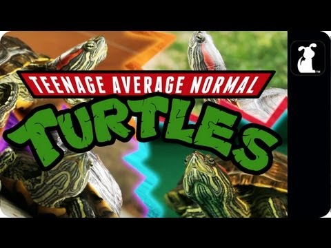 Teenage Mutant Ninja Turtles Parody - Teenage Average Normal Turtles