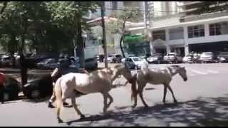 Cavalos complicam o tr�nsito na Av. Get�lio Vargas