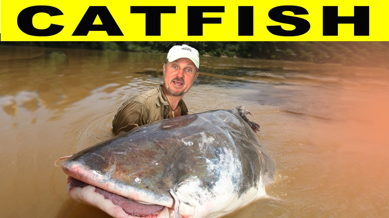 CRAZY CATFISH! - Amazon River Monsters - YouTube