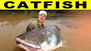CRAZY CATFISH! Amazon River Monsters