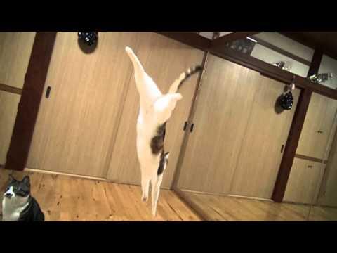 貓咪跳躍慢動作鏡頭,好美!