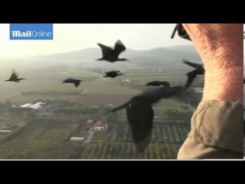 Why do birds fly in V formations Secrets revealed
