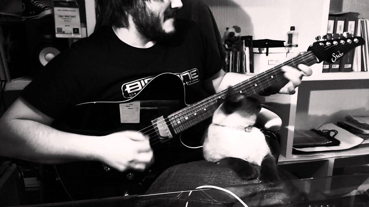 Le chat qui voulait jouer de la guitare