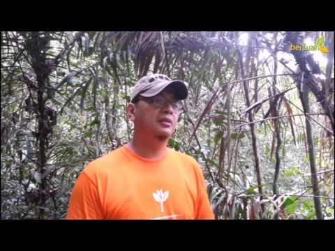 Hutan Larangan Adat Rimbo Potai Kampar - Riau
