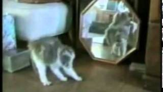 Video Kucing Lucu