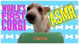 VLOGMAS DAY 4: WORLD'S FIRST CORGI ASMR Ft. GAMJA, Q & A and MORE!!