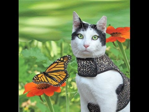 """A Rescue Cat and the Elusive Monarch Butterfly"" [Great film/video, beautiful music]"