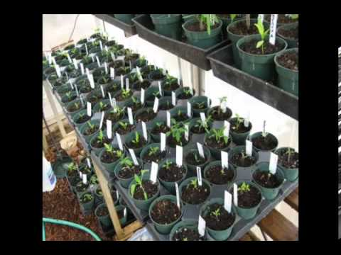 Build A Business Out Of Your ORGANIC Garden - #1 E-Book
