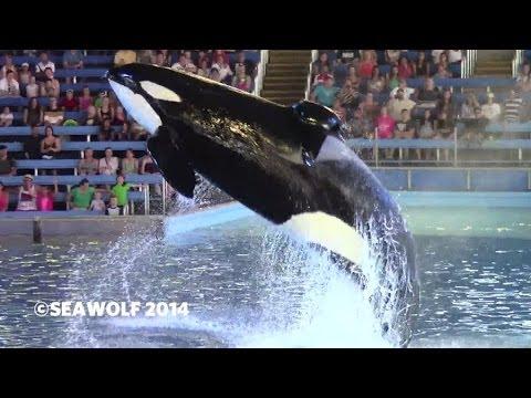 SeaWorld San Antonio - One Ocean - 04.11.2014