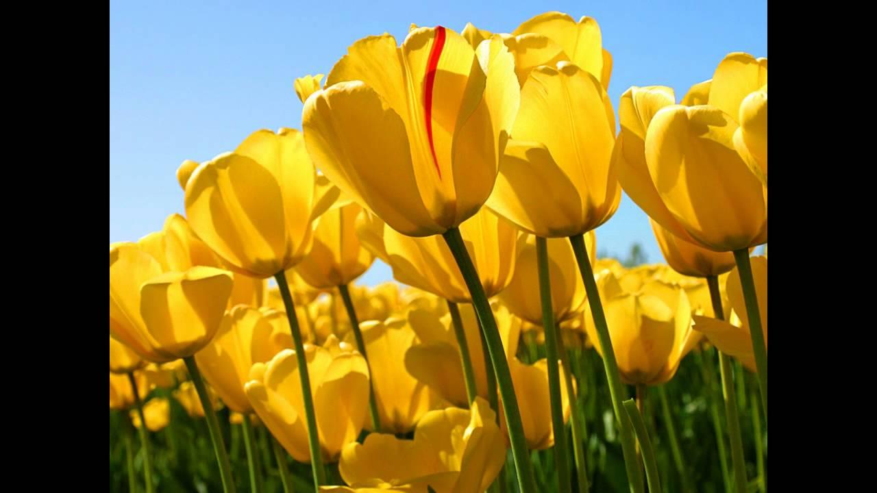 Wale Lotus Flower Bomb Instrumental Wmv Youtube