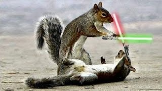 Jedi Chipmunks In Adorable LIGHTSABER BATTLE