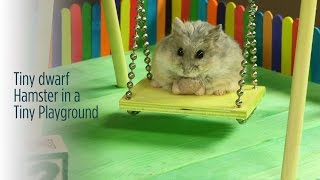 Tiny Hamster Playing in a Tiny Playground