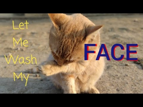 Cats Cleaning | Cats Grooming | Cat Bath | Cats Relaxing | Funny Cat Videos | meow meow | Cat