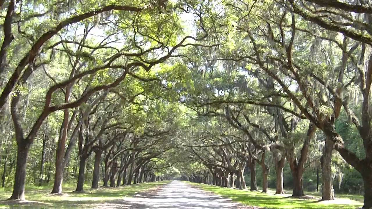 Wormsloe Plantation Tours