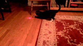 Ngerjain kucing, nyimpen laser di kepalanya