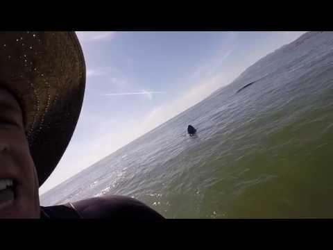 Whale hits Paddle Boarder- Ocean Beach :) San Francisco