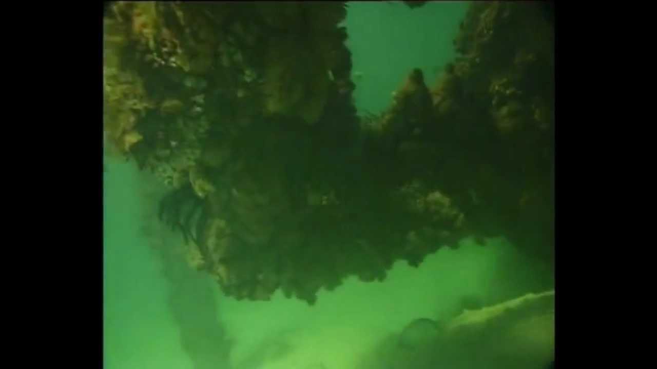 大堡礁意外拍攝到人魚?!你相信美人魚真的存在嗎?