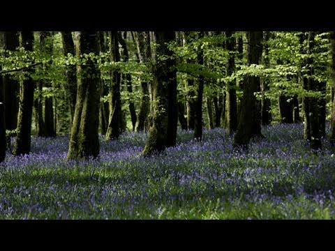 Relaxing Nature Sounds- Instrumental Cello Music- Tranquil Forest Bird Song-Emotional-Sad-Haunting