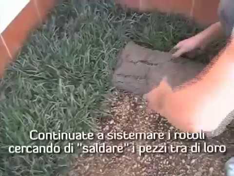 Impiantare un tappeto erboso in rotoli youtube for Tappeto erboso a rotoli