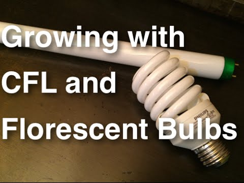 How to Grow Plants using CFL and Florescent Lights - Growing Indoors Cheap, Easy and Effective