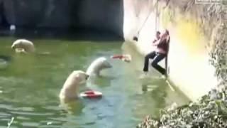 Mujer cae en pozo de osos polares