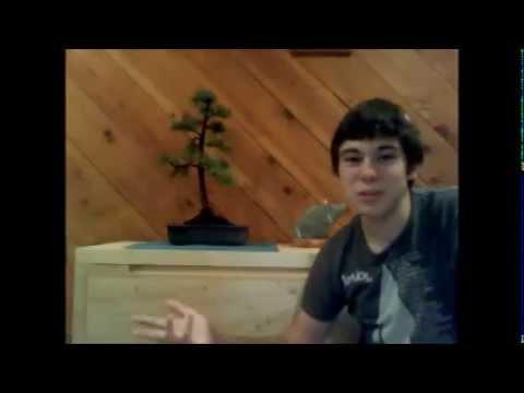 Bonsai video# 2 Larch