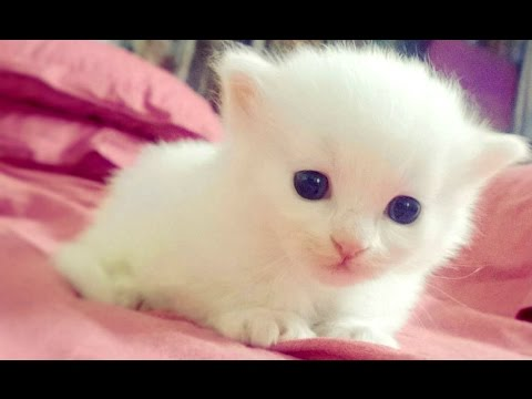 Baby Animals - A Cute Animal Videos Compilation 2016