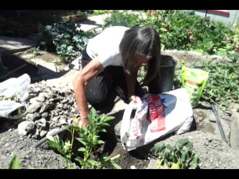 Nanoo's gardening lesson