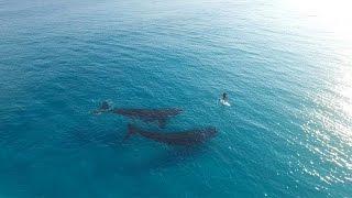 Remando en tabla con ballenas gigantes
