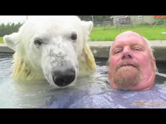 play video: Grizzly Man |The Only Man In The World Who Can Swim With A Polar Bear