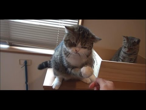 草とねこ。-Grass and Maru&Hana.-