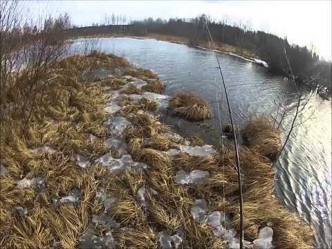 Kaudenavaus, Kevät haukea joesta.