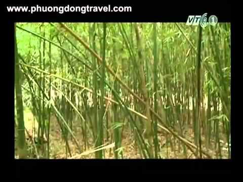 [VTC1] Hành Trình Du Lịch Hà Nam - Khám phá Kim Bảng P2