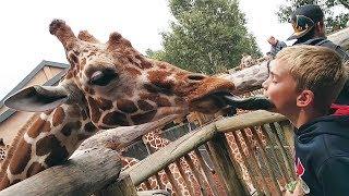 Animales divertidos en el zoo